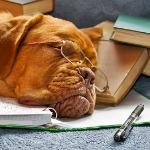 Dog-Sleeping_150
